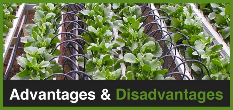 What are the advantages and disadvantages of drip irrigation?