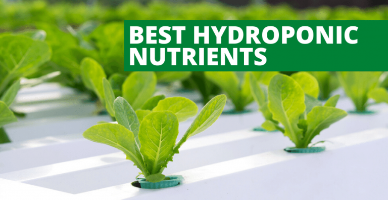 Top 5 Best Hydroponic Nutrients (2021 Reviews Updated)
