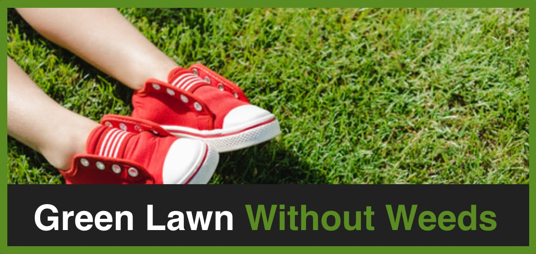 Green Lawn Without Weeds Green