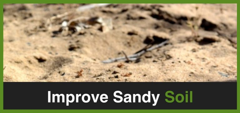 How To Improve Sandy Soil For Lawn – Simple Ways