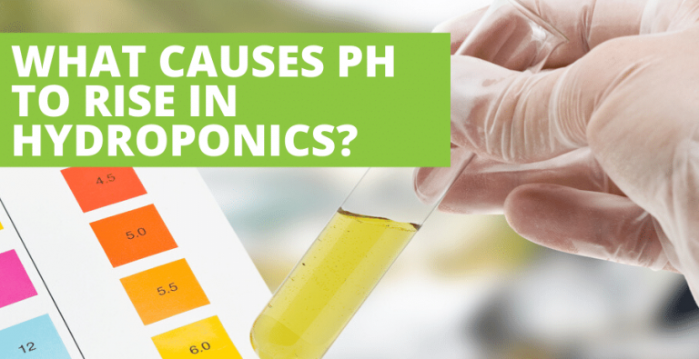 What causes pH to rise in hydroponics?