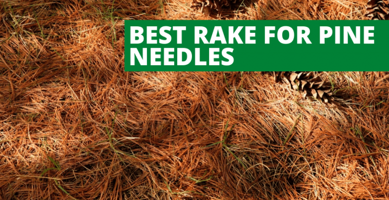 Best Rake for Pine Needles (2020 Reviews Updated)