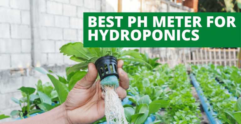 Top 4 Best pH Meter for Hydroponics (2021 Reviews Updated)