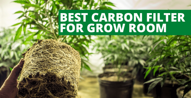 Top 5 Best Carbon Filter for Grow Room (2021 Reviews Updated)