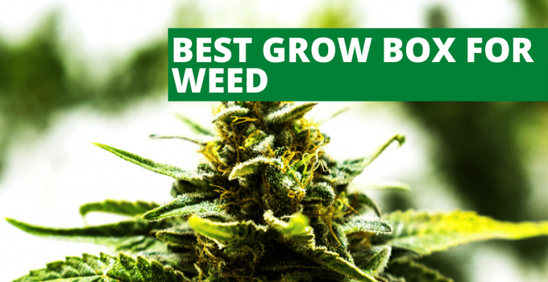 Top 5 Best Grow Box for Weed and Marijuana (2021 Reviews Updated)