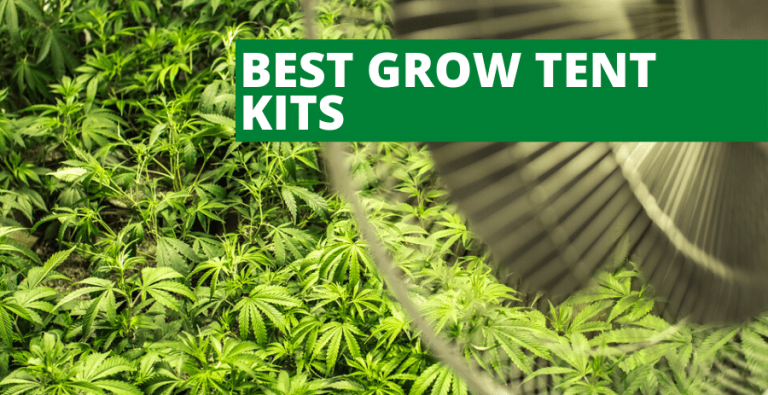 Top 3 Best Grow Tent Kits (2021 Reviews Updated)  Fully Automated Grow Box Setup